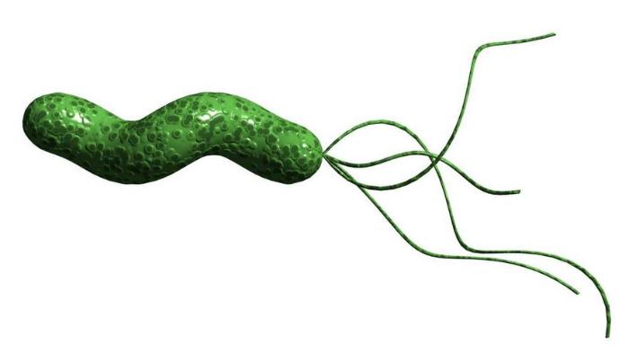 bakteria helicobacter