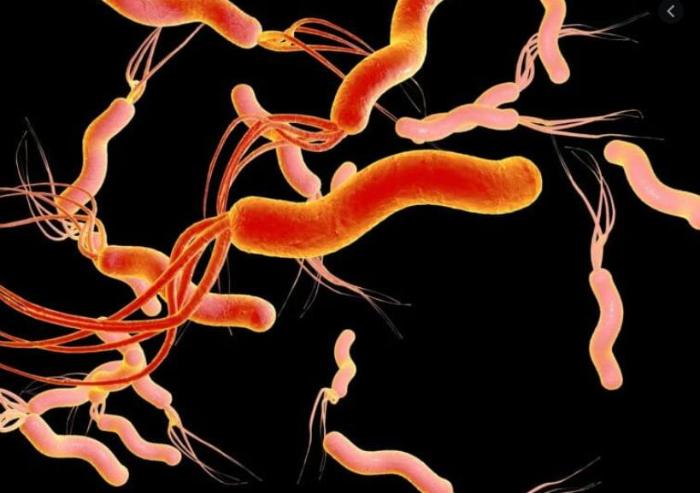 helicobacter pylori leczenie